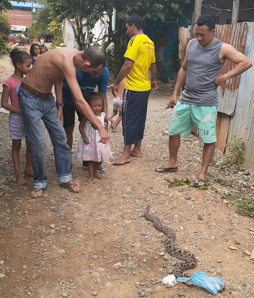 Matan culebra de más de metro y medio en Villa Arabia en Caucasia Antioquia