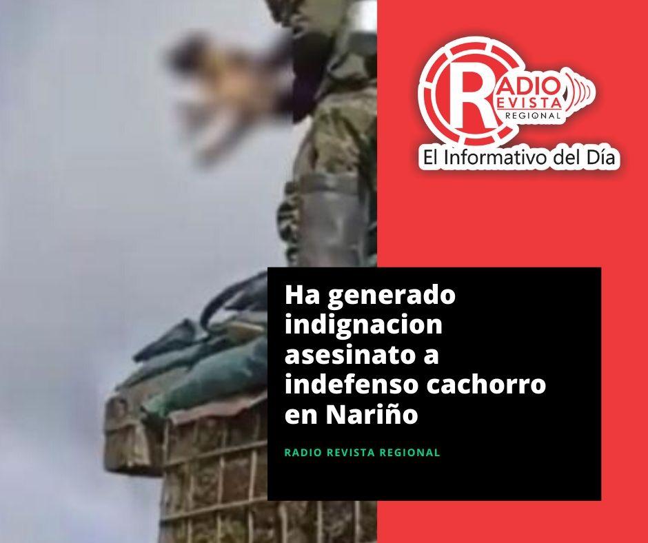 Ha generado indignacion asesinato a indefenso cachorro en Nariño