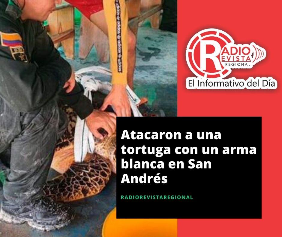 Atacaron a una tortuga con un arma blanca en San Andrés