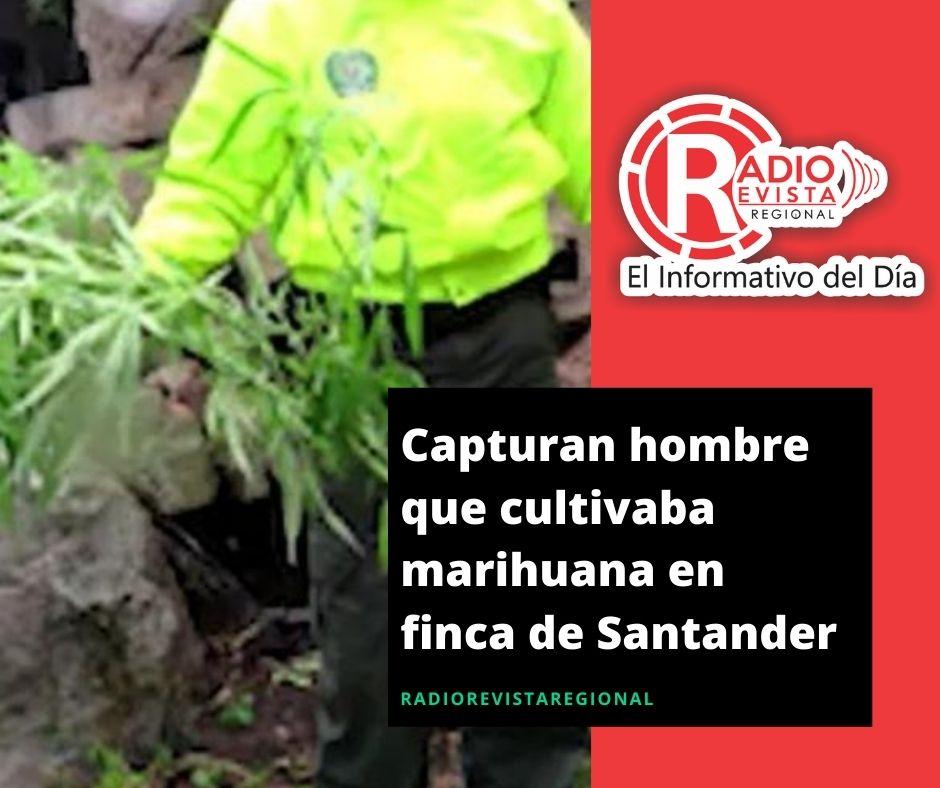 Capturan hombre que cultivaba marihuana en finca de Santander