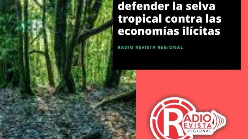 Duque insta a defender la selva tropical contra las economías ilícitas
