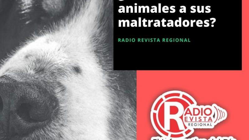 ¿Están devolviendo animales a sus maltratadores?