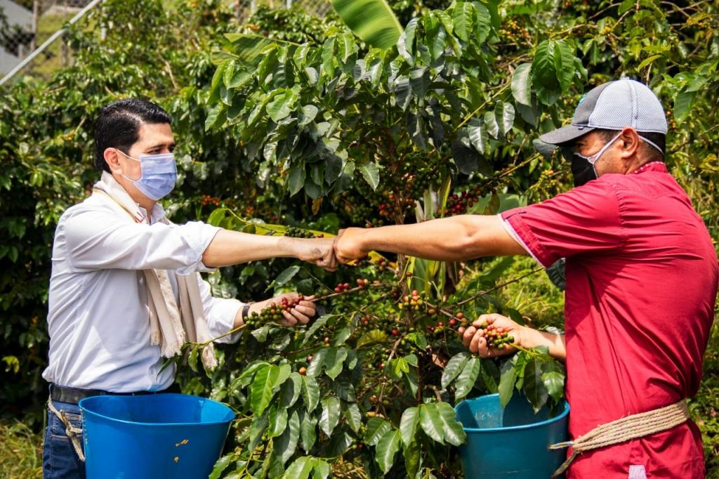 La Cosecha Cafetera no registró muertes por covid-19 en Antioquia