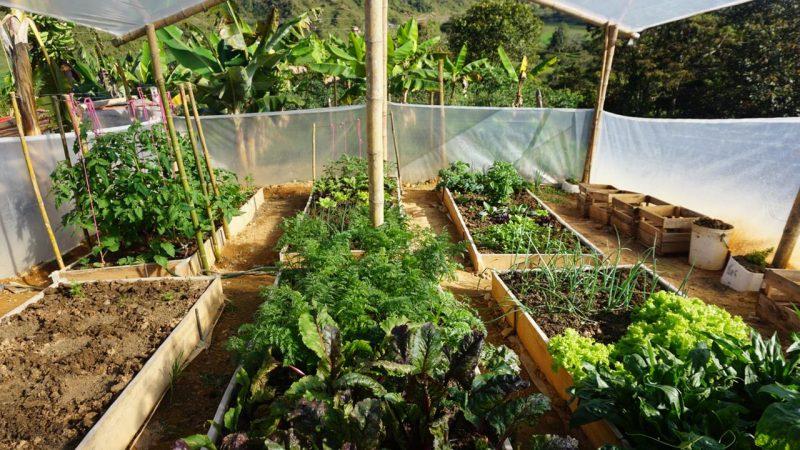 El Plan Docenal de Seguridad Alimentaria y Nutricional de Antioquia presenta avances en su implementación