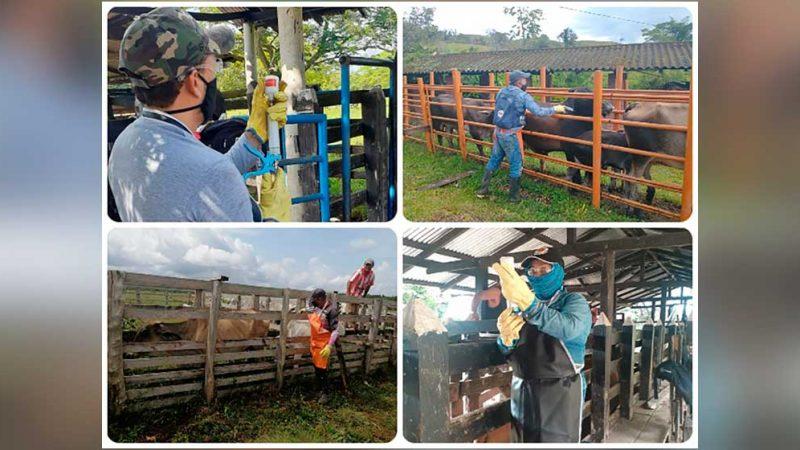 El próximo 10 de mayo se inicia el primer ciclo de vacunación contra la fiebre aftosa y brucelosis bovina