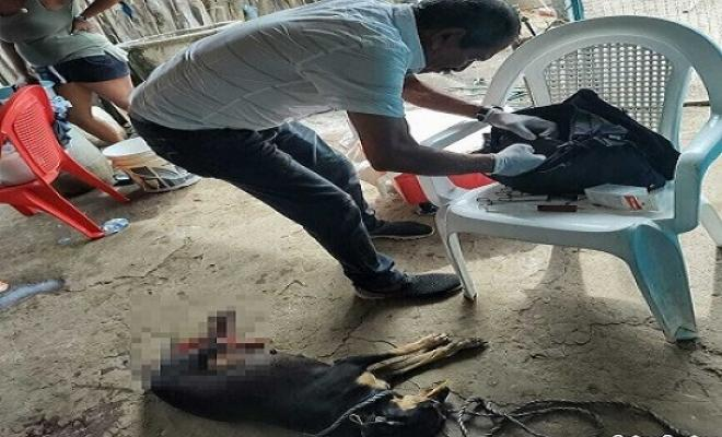 Con un machete atacó y provoco graves heridas a una perrita en Córdoba