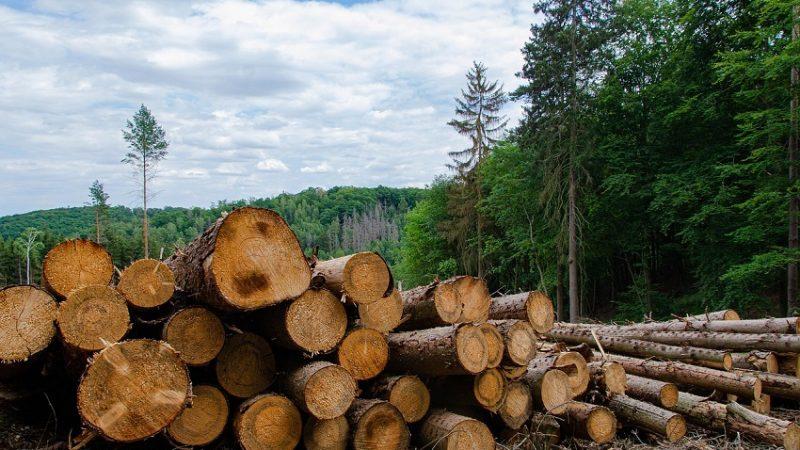 Como 'un hecho histórico para el país' calificó Ministro de Ambiente aprobación del proyecto de ley que penaliza la deforestación