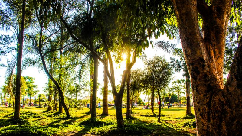Con alianza para sembrar 3 millones de árboles, Antioquia celebró el Día Mundial del Medio Ambiente